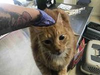 PUMPKIN's story Clay County Animal Control Hours of