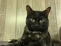Pumpkin's story Pumpkin is a very sweet girl. She loves