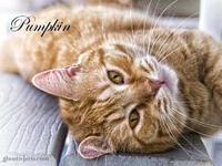 Pumpkin's story All of our pets are spay/neut, up to