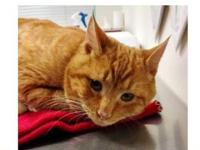 Pumpkin's story Pumpkin was found on the 87000 Blk. Of