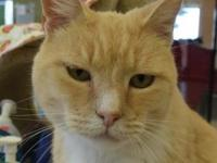 Pumpkin Muffin's story **Volunteers shared this about