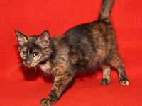Pumpkin (Spayed/Combo Tested)'s story Pumpkin is a