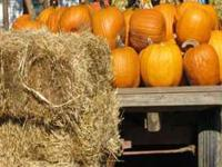 We now have pumpkins, in a varity of sizes, for our