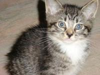 Punky's story Estimated birth date 2/06 brown tabby and