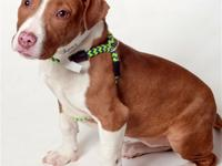 Puppy LoveStop by the shelter and meet me! I'm cute,