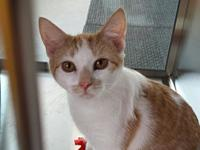 Punkydoo's story Punkydoo is a sweet young kitty that