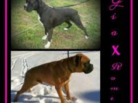 Coming Soon Confirmed breeding! Young puppies due: