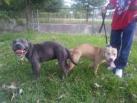 for sale Razor Edge/ Zulu on left that is the father