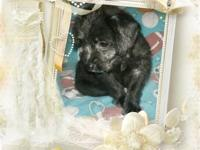 I have 2 male and 2 female puppies. They will go to