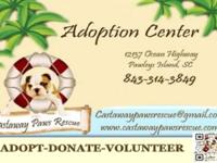 Castaway Paws rescue will be at the mt pleasantpleasant