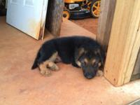 i have 3 females and 3 male greman shepherd puppies.