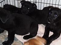Puppies's story check out more information on our