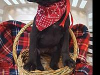 Puppies's story 5 puppies available. 2 males and 3