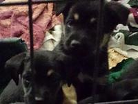 Puppies!'s story CMACC works with animal rescues and