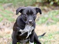 PUPPY BLUEBONNET's story   Blue Bonnet is a sweet