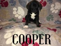 Up for adoption in Texas and New England: Puppy
