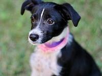 PUPPY LI'L GINA's story Lil Gina is a total love of a