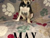 Up for adoption in Texas and New England: Puppy Max.