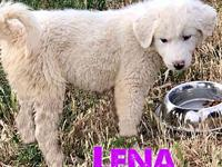 Puppy (Lena)'s story Lena is an adorably fluffy 10-12