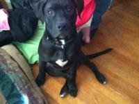 He is 4mos old great with kids dogs and cats...we were