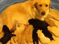 There are ten beautiful puppies that will be ready to