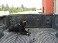 We are selling our 1 1/2 year pure bred black shar pei.