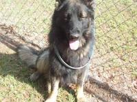 I HAVE A GEORGEOUS BLACK SABLE MALE, LONG HAIRED, 1
