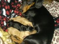 These valuable little young puppies will be offered for