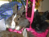 !! EASTER BUNNIES...!!! GENTLE SWEETIES.. LOCAL