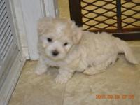 I live in O'Brien, Florida and have Maltese puppies