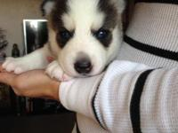 He is only 4 weeks old right now but will be ready for