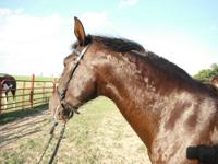 I have 2 bay Andalusian mares, 10 yrs, and 5 yrs. for
