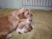 Woofin Waggin Bred & & Biscuit, LLC has 2 males left.