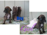 For sale will be ready 10/11/12 at 8 weeks old. Born