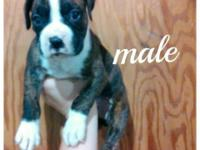 We have three female and two male puppies available all