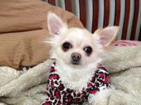 Wonderful little female searching for a residence with