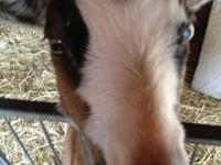www.facebook.com/melinda.pets Go to my facebook page