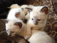 These breathtakingly beautiful kittens are playful,