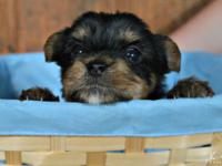 I have 3 purebred Yorkie puppies left for sale. 2 women