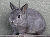 I have two beautiful purebred netherland dwarf bunnies