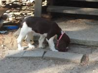 I have a female springer ready for good home she is 3