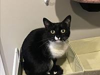 Purrlion's story I am such a sweet and chatty girl. I