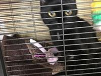 Purrsy's story Freedom Pets received a call from a