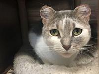 Purrz's story Looking for a great, talkative companion?