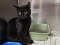 Purty's story By adopting me today you will save the