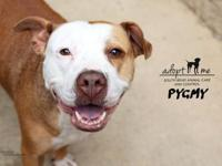 Pygmy's story Meet Pygmy. This short statured pup is