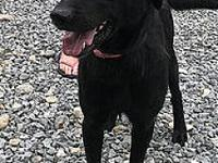 Pyle's story Pyle is a 2-year-old neutered male black