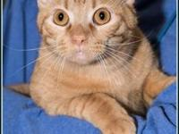 PYRO's story $97.50 FEE INCLUDES: neutering/spaying,