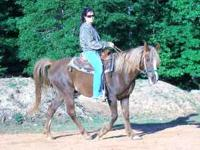 Quarter Horse - Arabian Mix Gelding Approximately 17