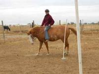 10 year old, 14.2 gelding.Asking 800 but good home most